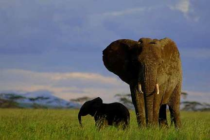 Elefanteak